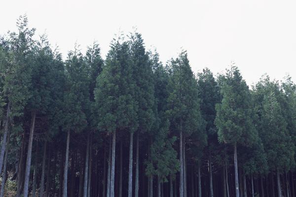 森林イメージ図